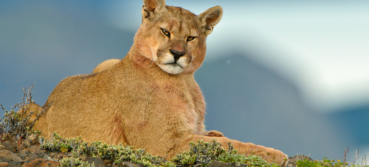 La Diversidad de Fauna en Chile Patagonia