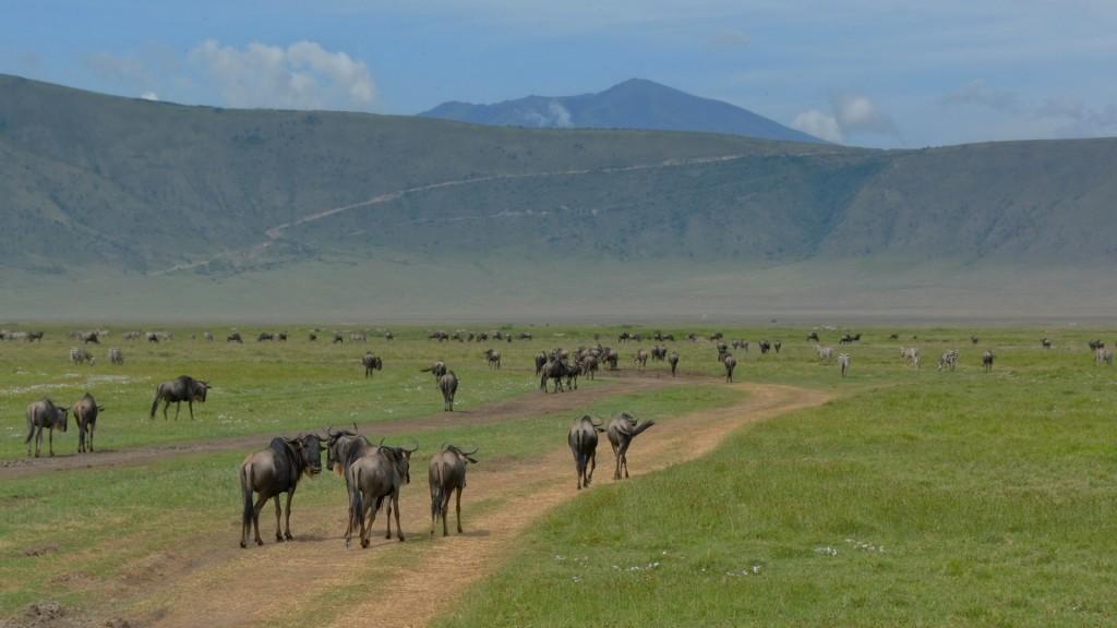 Es una zona protegida situada a 180 km al oeste de la ciudad de Arusha, en las tierras altas volcánicas de Tanzania.