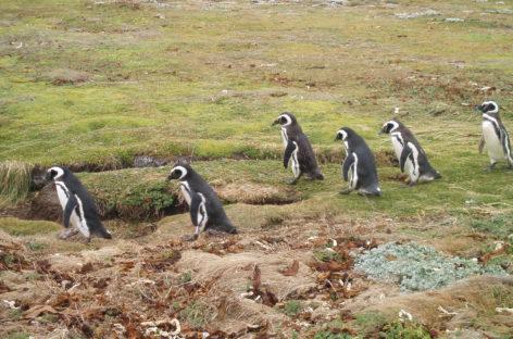 Pinguineras del Seno Otway