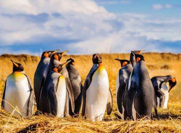 La diversidad de La Fauna en Chile parte I