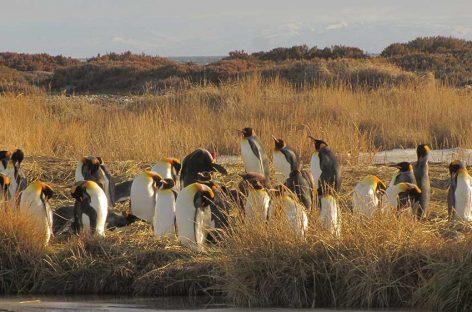 La Ciudad de Porvenir y El Parque Pinguino Rey.